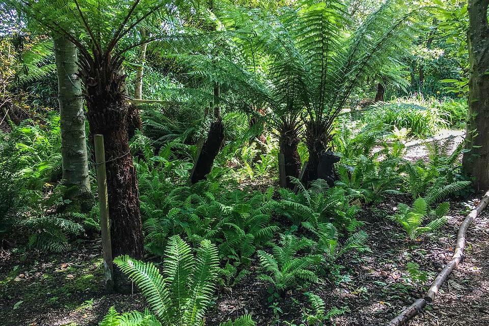 Priory Maze & Gardens Fern Walk